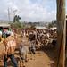 67_2009_01_Ethiopia_205