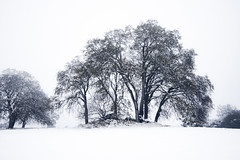 Snow and Oaks (stephencurtin) Tags: california county trees winter snow cold tree landscape grey oak rocks december day eldorado oaks 2013 thechallengefactory