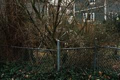 _DSC4110 (Marko Mihailovich) Tags: color illinois neighborhood evanston alleyways leica50mmf2summicron 35photo nikond800e markomihailovich