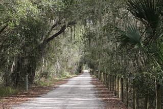 Canopied dirt road