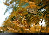 danbo_100 (iskandarbaik) Tags: park uk autumn trees england tree cute home forest toy photography leaf woods bokeh outdoor manga cardboard autumnal yotsuba danbo danbooru revoltech danboard cardbo danboru