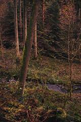 Black Forest Stream Landscape 3 (Uwe von Loh) Tags: landscape sigma schwarzwald merrill foveon dp2