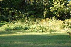 "Forest Garden in Progress <a style=""margin-left:10px; font-size:0.8em;"" href=""http://www.flickr.com/photos/91915217@N00/12450298383/"" target=""_blank"">@flickr</a>"