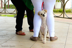 I don't want to be vaccinated! (Fernanda Cerioni ) Tags: dog co animal animals perro cachorro poodle