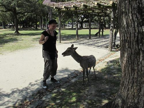 Premier contact avec les cerfs de Nara, Japon
