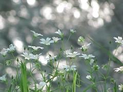 Blumen am Fluß (germancute) Tags: flower nature germany landscape deutschland thüringen thuringia blume landschaft biketour germancute