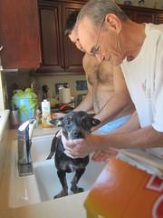 Shower time (2) (gerbet) Tags: california dog water shower desert palmsprings ozmo