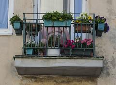Balconies of Praga - the master in his garden (objectivised) Tags: old flowers man buildings tits balcony fat praga warsaw warszawa obese stara