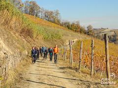 Il Sentiero del Torion (gabriferreri) Tags: camminare dumacanduma nordicwalking camminatanordica roero rocche del vezza dalba torion vigne vigneti bosco wood