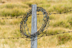 Barbed wire fence (pego28) Tags: barbedwirefence sdtirol italen italy southtyrol ratschings rinnersattel natur nature holiday vacation urlaub berge alpen hill mountain alps himmel 2016 nikon nikkor d800 wander hike tramp alm wasserfalleralm wasserfallersee