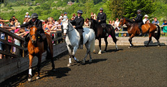 Unsaddled Circuit (meniscuslens) Tags: horse hounds heroes police charity buckinghamshire trust
