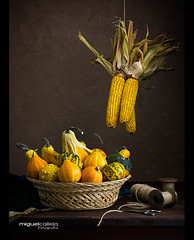 MAZORCAS Y CALABAZAS (Miguel Calleja) Tags: calabazas mazorcas maz corncob citrouille pumpkin bodegn stilllife naturemorte naturamorta