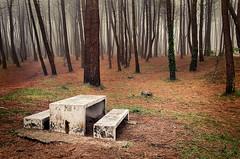 otoo (franadag) Tags: bosque woods niebla flog naturaleza nature otoo autumn liencres cantabria
