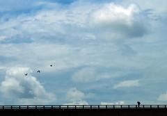 Foot Vs Wing (Aranya Ehsan) Tags: wing foot people life lifestyle dailylife blue sky clouds umbrella minimalism sillhoutte shillhoute dhaka bangladesh aranya bird fly canon bridge space