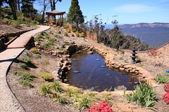 2016-10-05_Leura_3-OPT (marcus77clark) Tags: flowers wentworth falls leura katoomba mountains everglades tomah national park nsw australia waratah