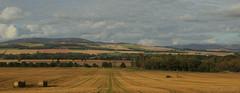 Careston Landscape (Keith (foggybummer)) Tags: brechin careston hills bales farming fields landscape trees angus