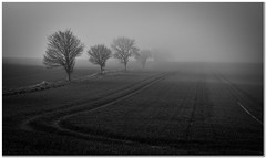Into the mist (Hugh Stanton) Tags: trees fog mist field ploughed appickoftheweek