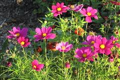 IMG_0225 (hammonton_garden) Tags: 2016 communitygarden fall hammonton southjersey nj gardenstate