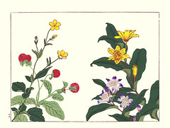 Avens, globeflower, Japanese toad lily and yellow toad lily (Japanese Flower and Bird Art) Tags: flower avens geum japonicum rosaceae globeflower gomphrena globosa amaranthaceae toad lily tricyrtis hirta liliaceae yellow flava hoitsu sakai kiitsu suzuki kimei nakano nihonga woodblock picture book japan japanese art readercollection