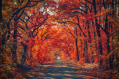 Avenue (cpo-photography {C Owen}) Tags: trees fall autumn paderborn weg path leaves bltter baum burning flames fire