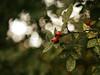2016-09-26_17-20-50 (torstenbehrens) Tags: fruit nature bokeh tarbek schleswigholstein panasonic dmcg1