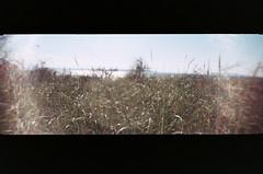 009_9 (*Snap_Shot*) Tags: anscopanoramapix ansco panorama plasticcamera plasticlens flippedlens plasticfantastic jettyisland everett everettwa seattleflickrmeetup msejettyisland1308 anscopixpanorama buyfilmnotmegapixles flimsnotdead expiredfilm fujifilm200 beliveinfilm ishootfilm 35mm panoramic fakepanorama poe portofeverett