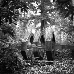 Concrete Jungle (DanRSmith) Tags: bw blackandwhite monochrome sculpture park surrey rolleiflex xenotar 35e kodaktrix pushed iso1600 rodinal