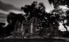 20161104_1866 Ruins of Prasat Kok Chak (otaphoto16) Tags: temple ancient angkor cambodia kokchak dusk sunset tree sky garuda bricks sandstone ruin cow animal canon otaphototours
