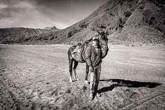 Aguk (Trent's Pics) Tags: landscape outdoor boy horse volcano crater mountbromo bromo indonesia java eastjava aguk