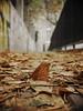 lonely in a city (Darek Drapala) Tags: lonely leaves leaf autumn city town panasonic poland polska panasonicg5 warsaw warszawa sad dark