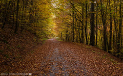 The winding path in the colorful forest. (andreasheinrich) Tags: forest path trees autumn autumncolors november germany badenwürttemberg neckarsulm dahenfeld colorful deutschland wald weg bäume herbst herbstfarben farbenfroh nikond7000
