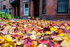 Leaves ((Jessica)) Tags: autumn boston leaves massachusetts newengland fall southend foliage