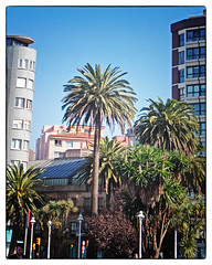 Gijon. (karl from perivale) Tags: gijon spain trees lampost building architecture palmtrees outdoor street colourful green plant