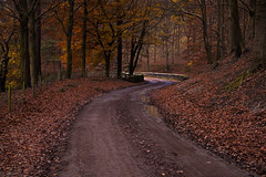 Late autumn - Fairholmes, Derbyshire [Explored 24-11-16] (Bon Espoir Photography) Tags: autumn lateautumn leaves trees rust yellow bridge lane path fairholmes landscape derbyshire england uk walk nikond750
