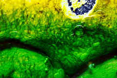 Algae garden : The natures artistry-VIII. (biswarupsarkar72) Tags: algae algalgrowth naturesartistry macro abstract abstractphotography nature