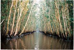 (tayn3) Tags: mekong delta vietnam film 35mm analog shootingfilm kodak ektar ektar100 indochina chaudoc olympus om2n wildtravel mangroves forest flooded kodakektar100 olympusom2n 50mm analogue mekongdelta darkly magic ethereal dreamscape