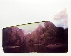 River Halved (dreamscapesxx) Tags: instant polaroid supershooter polaroid689film expiredfilm halfanimage beautifuldisaster halfariver overcast bytheriver hillsboroughriver johnbsargeantpark oldflorida wilderness snapitseeit thonotasassafl