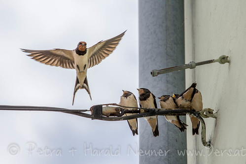 5 hungry swallows