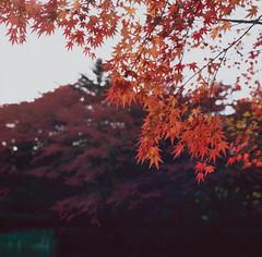 Red (The view from my eyes) Tags:  japan bronica sq 120 fim fujifilm provia 100f rdp mindium medium format