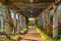 to_the_left (gerhil) Tags: landscape scenic outdoor garden trellis pattern repeating plants structure covering walkway path autumn november2016 nikcolorefexpro4 converginglines park serene 1001nights 1001nightsmagiccity