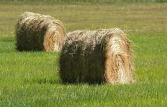 hay bales (veebruar) Tags: summer hay