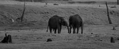 Kabini (m I m) Tags: nature forest canon wildlife 300mm 7d karnataka kabini monish jlr