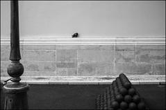 PG (Julien.Rapallini) Tags: bird noir fuji pigeon monaco mur blanc rocher boulet sieste dort x100 lampadère
