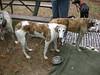 GreyhoundPlanetDay2008050