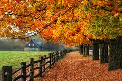 Instant - Nature (Renald Bourque) Tags: autumn orange canada color nature automne canon photographer quebec quality québec maison renald naturewatcher
