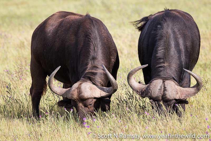 Agulhas National Park - South Africa