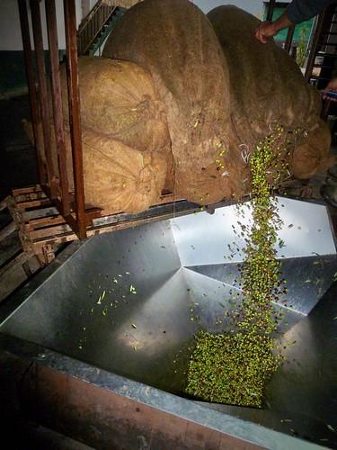 Visite d'une presse d'huile d'olive, Megali Mantineia, Grèce