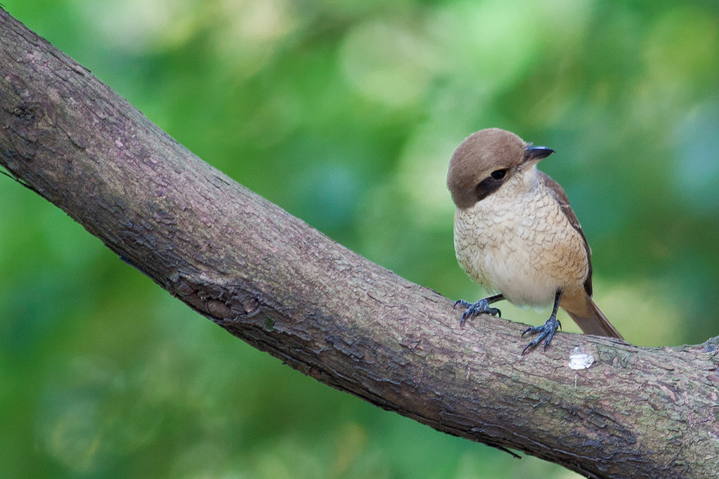 我也開始拍鳥了....