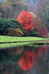 Autumn at Stourhead (lens buddy) Tags: uk bridge autumn trees england lake colour reflection heritage fall nature leaves canon fallcolors autumncolours stourhead wiltshire nationaltrust lanscape englishgarden beautifulplace canoneosdigital stourheadgardens