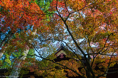 clayhaus-IMGP6704_5_6-Edit (clayhaus) Tags: world travel autumn fall tourism japan temple japanese pagoda ancient asia buddha buddhist buddhism east zen temples nippon nikko shogun shinto shrines j
